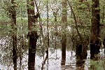 Flood-plain forests