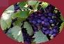Víno, vínko - Stránky pro přátele vína