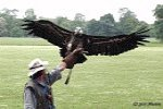 Birds of Prey Zayferus