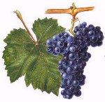 Vinařská vesnička